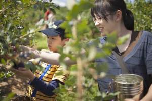 Yoshie Arai and her son Tatsuki, 10, pick blueberries near Portland, Ore.