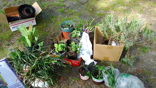PlantCatching, an online 'catch and release' community that connects folks in possession of unwanted/surplus gardening materials with those who might want them, aims to curb gardening-related waste.